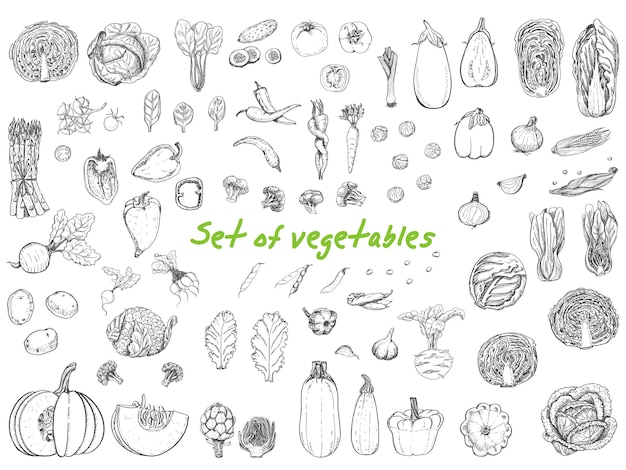 Big set with vegetables in sketch style Premium Vector