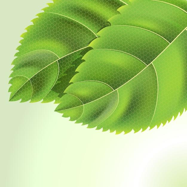 Био зеленые листья фон с каплями на белом Бесплатные векторы