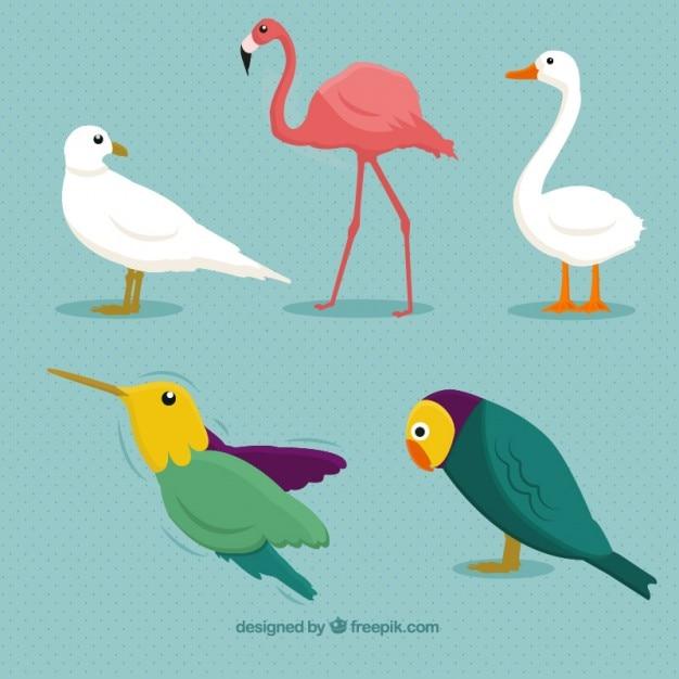 Bird breeds Free Vector