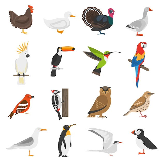 Bird flat color icons set Free Vector