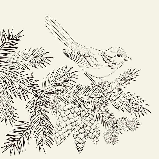 Птица на сосновой пихте с шишкой Бесплатные векторы