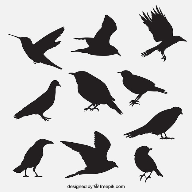 Bird outlines collection Vector Free Download
