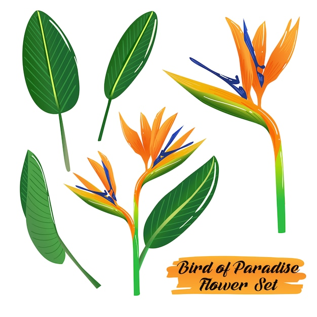 Bird of paradise flower summer set Premium Vector