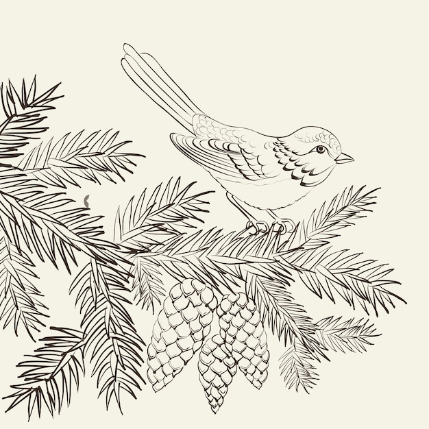 Bird on pine fir with pinecone Free Vector