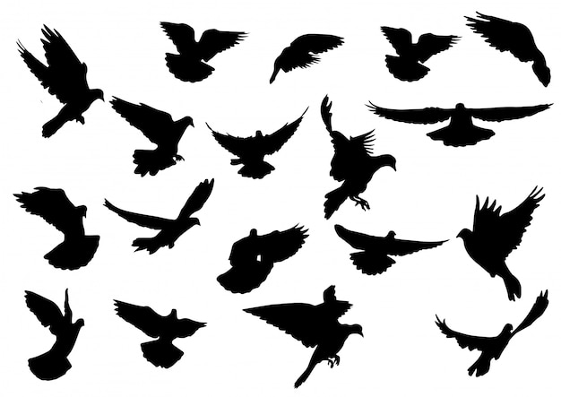 Bird  silhouette isolated on white background. Premium Vector