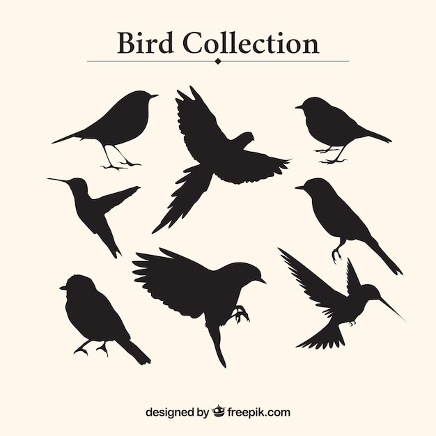 Bird silhouettes collection Free Vector