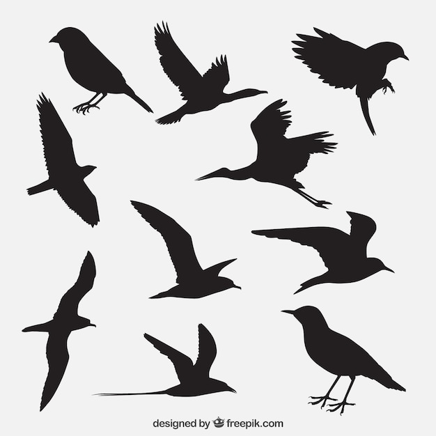 Bird silhouettes pack Free Vector