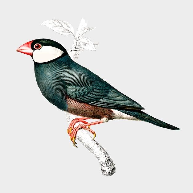 Bird Free Vector