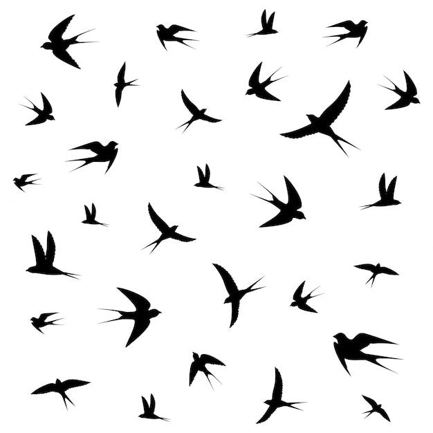 Birds circling Premium Vector
