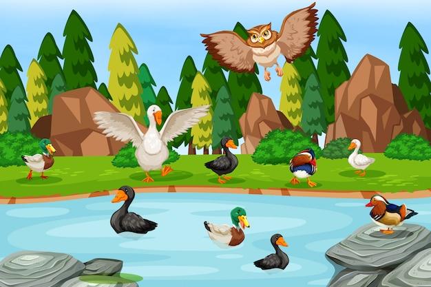Birds in lake scene Premium Vector