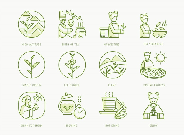 Birth of chinese tea set with emperor, tea brewing, leaf,buddhist monk, girl, fermentation, sun drying process and tea leaf streaming, Premium Vector