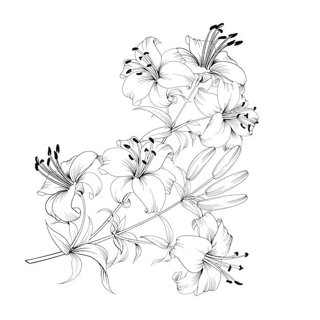 흑인과 백인 꽃다발 lilys 구성. 무료 벡터