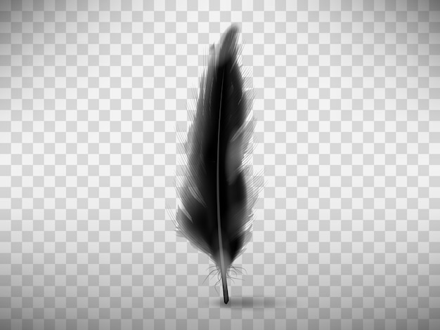 Black fluffy feather with shadow realistic Free Vector