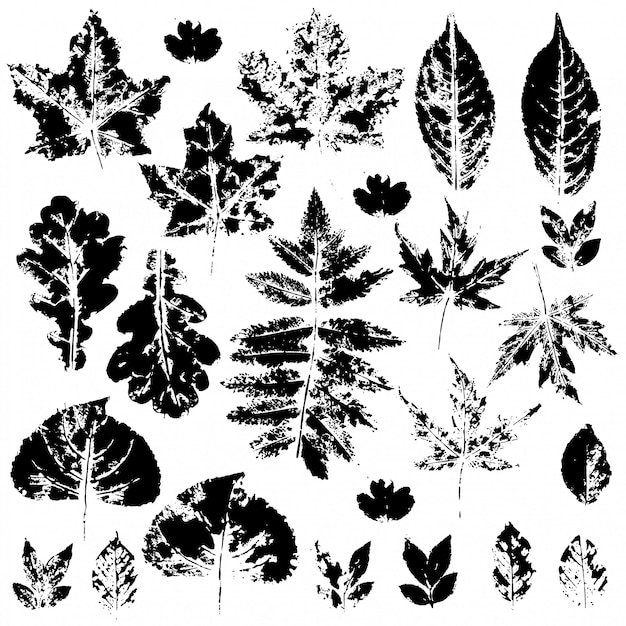 Black silhouettes of autumn leaves on a white background Premium Vector