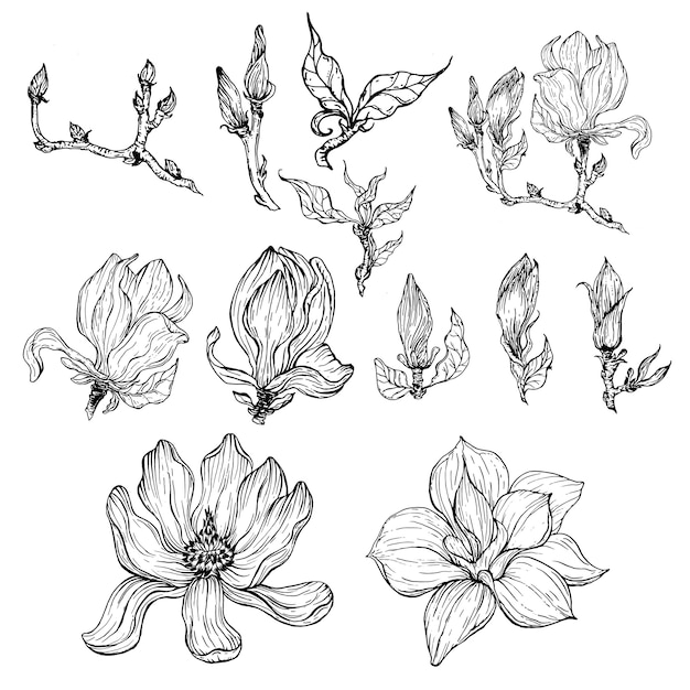 Black And White Contour Flowers And Magnolia Flower Buds And Leaves