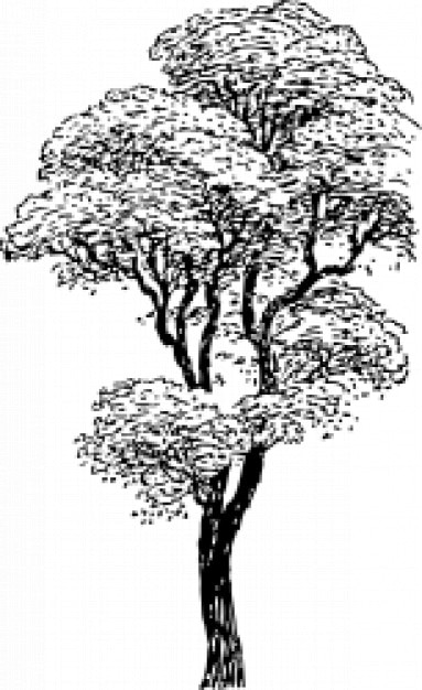 Black And White Tree Vector Free Download