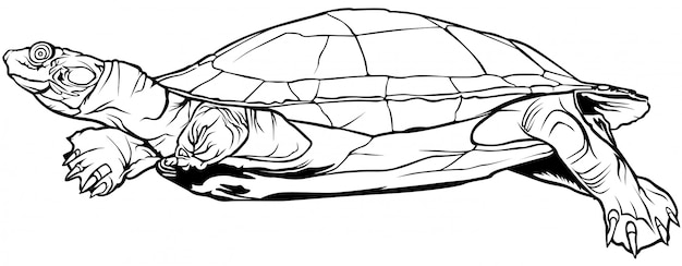 Black and white turtle Premium Vector