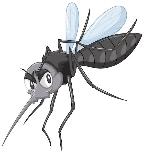 Black wild mosquito Free Vector