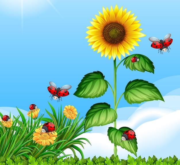 昼間に大きなひまわりと庭でてんとう虫と空白のシーン 無料ベクター