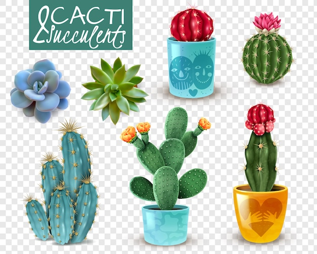 Цветущие кактусы и популярные суккуленты сорта легкий уход декоративные комнатные растения реалистичный набор прозрачный Бесплатные векторы