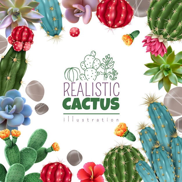 Blooming cacti and popular succulents varieties easy care decorative indoor plants realistic colorful square frame Free Vector