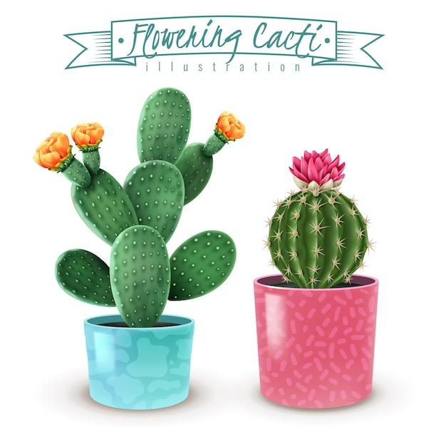 Blooming cacti realistic set of 2 popular houseplants varieties in colorful decorative pots closeup Free Vector