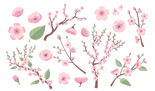 Blooming sakura branches Free Vector