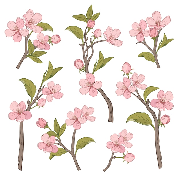 Blooming tree. Premium Vector