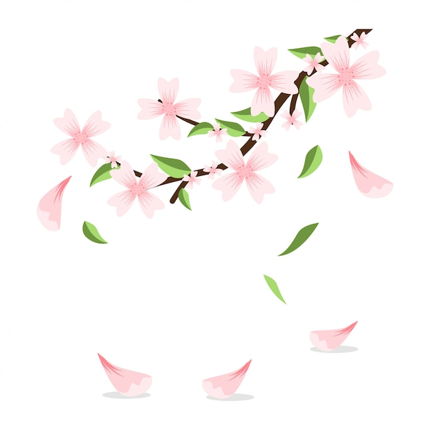 Blossom branch of sakura with falling petals and leaves. vector cartoon illustration isolated . Premium Vector