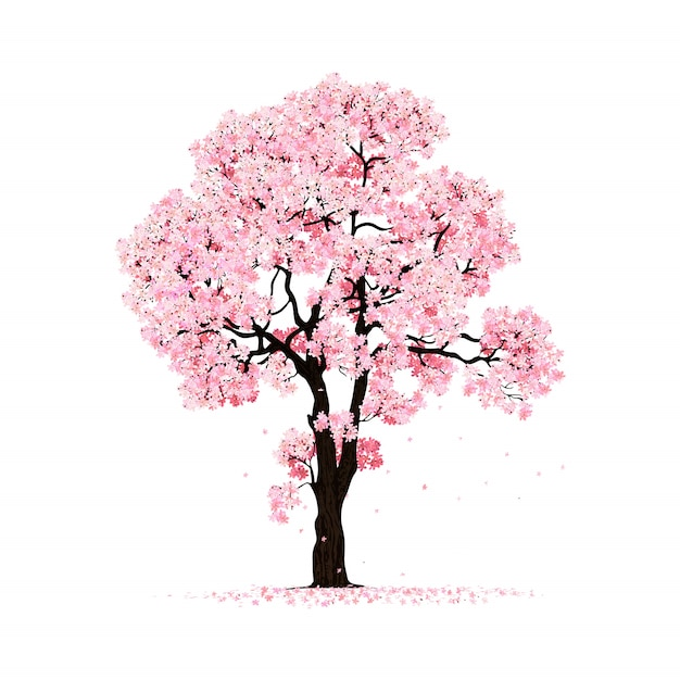 Blossoming pink sakura tree isolated Premium Vector
