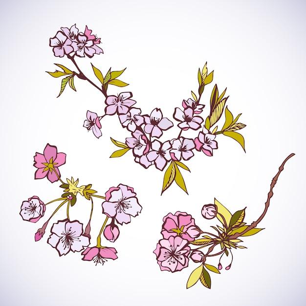Blossoming sakura decorative elements Free Vector