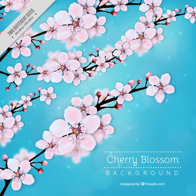 a05791e23 Blue cherry blossom background Vector   Free Download