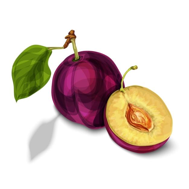 Blue natural organic plum fruit Free Vector