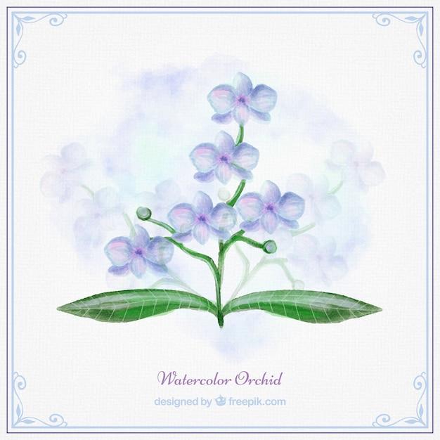 ブルー水彩蘭 Premiumベクター