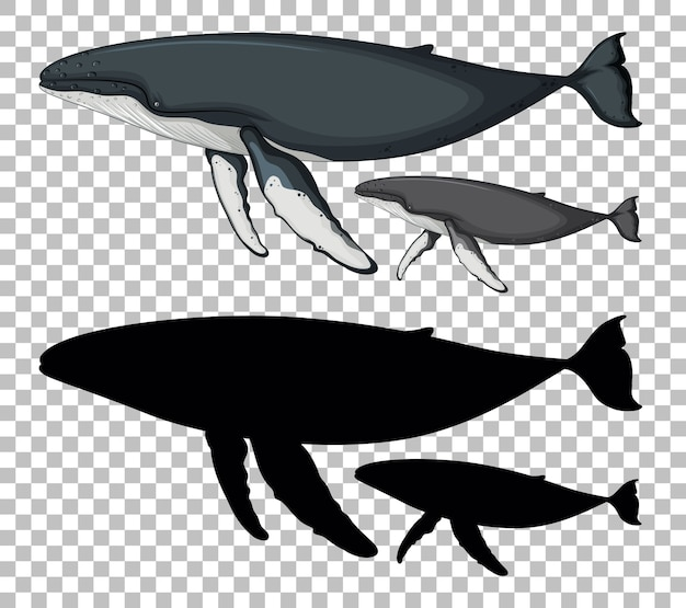 透明なシルエットのシロナガスクジラと赤ちゃんシロナガスクジラ 無料ベクター