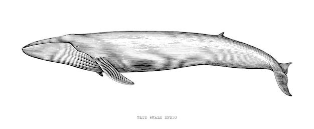 シロナガスクジラの手描きイラストヴィンテージ彫刻スタイル黒と白のクリップアート白 無料ベクター