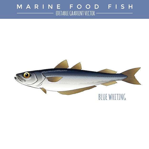 ブルーホワイティング。海産魚 Premiumベクター