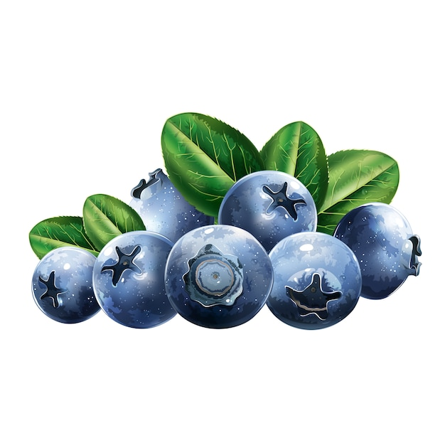 Blueberries with leaves Premium Vector