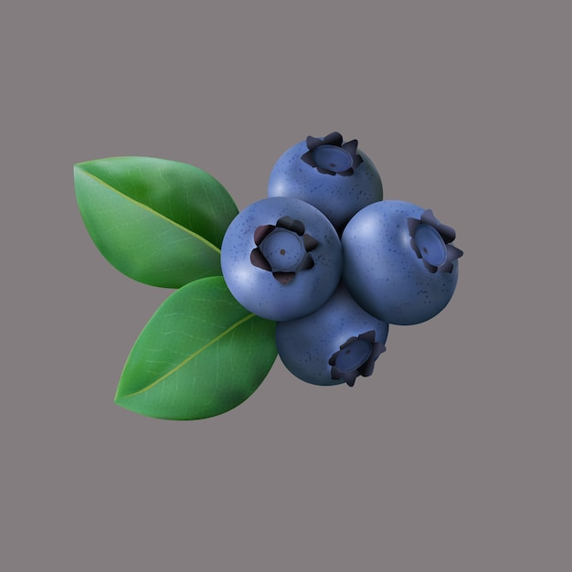 Blueberry with leaves isolated Premium Vector