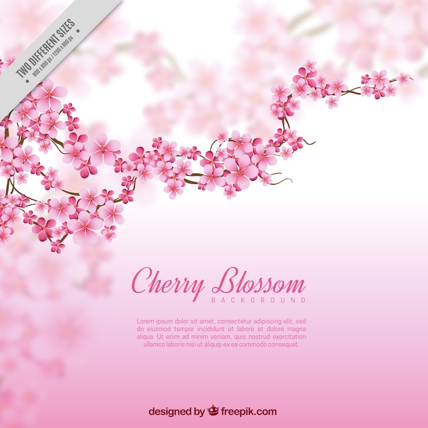 Blurred background with branch and cherry blossoms Free Vector