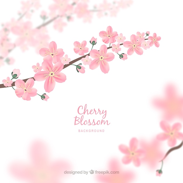 Blurred cherry blossom background  Free Vector