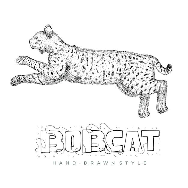 Bobcatベクトルは高速で実行されています。手描き動物イラスト Premiumベクター