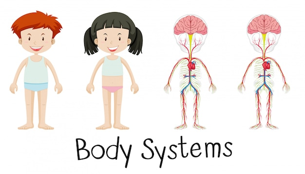 Body systems of boy and girl Free Vector