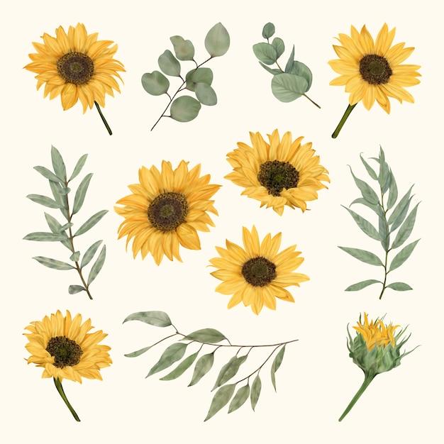 Boho sunflowers with eucalyptus leaves Premium Vector