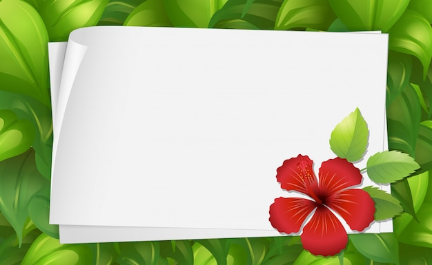 border template with hibiscus flower vector free download