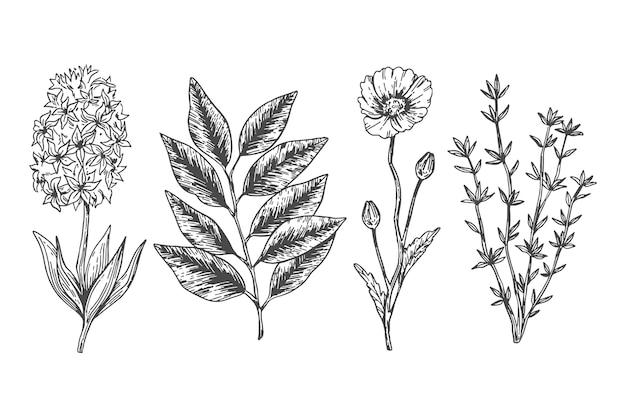 Fiori botanici in stile vintage Vettore gratuito