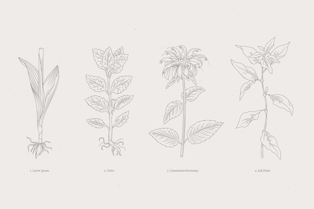 Botanic herbs & wild flowers monochromatic Free Vector