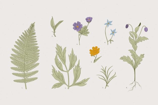 Botanic herbs & wild flowers in retro style Free Vector