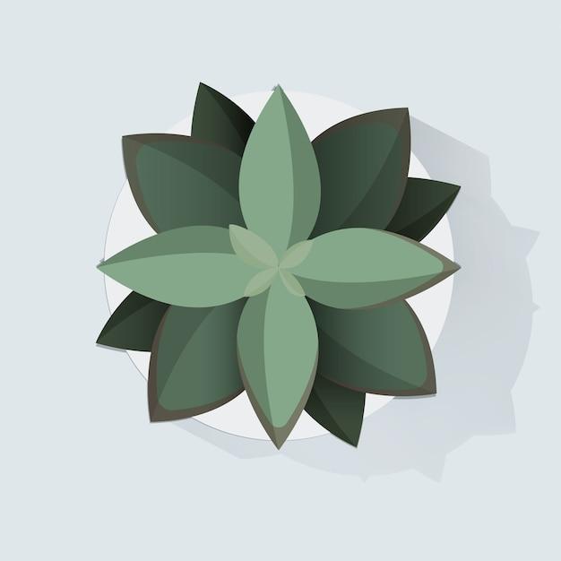 Botanic houseplant decoration vector illustration Free Vector