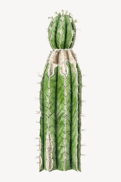 Ботаническая иллюстрация кактуса Бесплатные векторы